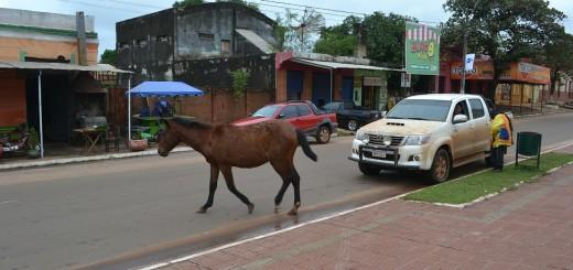 En plena Avda. de Pinedo este caballo pone en peligro el tránsito.