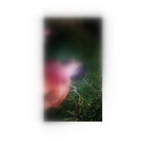 El cuerpo presenta una herida en el pecho/Foto: amambay570.
