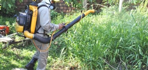 Las mingas son efectivas para combatir el Dengue