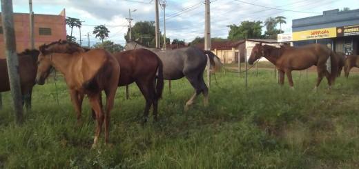 Equinos sacados de circulación/Foto Gentileza