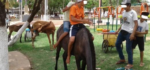 Sin medir el peligro, los niños montan los caballos