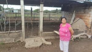 Miedo. Doña Venancia muestra su corral vacío, tras haber perdido a siete de sus animales.