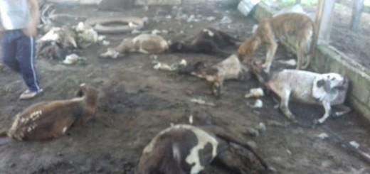 Animales masacrados por la fiera